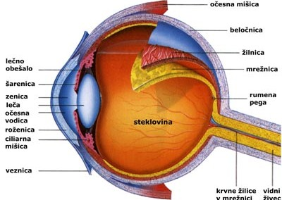Pomožne naprave očesa